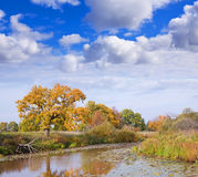 Autumn landscape with lake Royalty Free Stock Photography