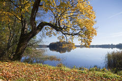 Autumn Landscape with a lake Royalty Free Stock Photography