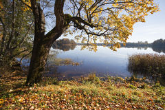 Autumn Landscape with a lake Stock Photo