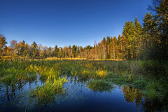 Autumn landscape with a lake Stock Images