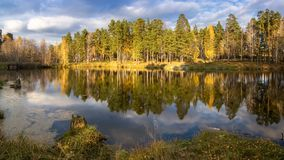 Panorama of the morning autumn landscape on the lake with birch forest on the shore, Russia, Ural, September royalty free stock images