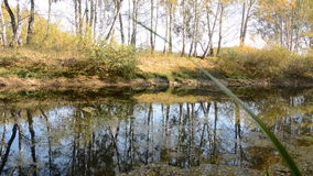 Autumn Landscape with a lake. Birches are reflected on the water stock video