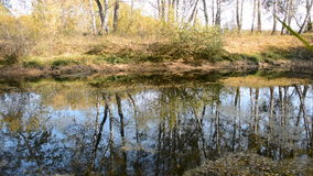 Autumn Landscape with a lake. Birches are reflected on the water stock video footage