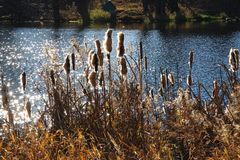 Autumn landscape on the lake. Royalty Free Stock Photography