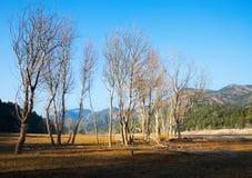 Autumn landscape with lake. Muga,  Catalonia Royalty Free Stock Photo