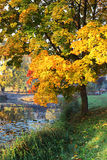 Autumn landscape with a lake in the park. Nature Stock Photos
