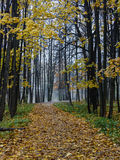 Autumn landscape with a lane Royalty Free Stock Photography