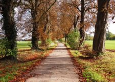 Autumn Landscape with lane between Trees Royalty Free Stock Image