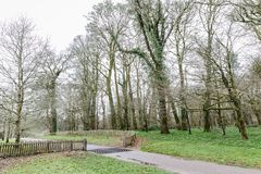 Large old trees in the park. Autumn landscape with large old trees in the park, empty road and wooden fence without gate royalty free stock images