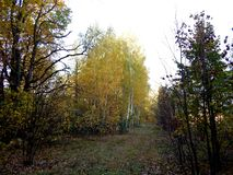 Autumn landscape of the leafy forest stock image