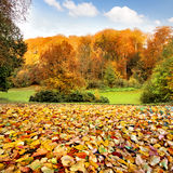Autumn landscape. The leaves in the foreground. Stock Photo