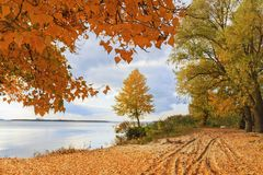 Autumn landscape - a lone tree on the river bank stock photos