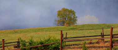 Autumn landscape with a lone tree, wooden fence and fog Royalty Free Stock Photos