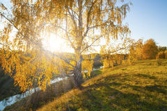 Autumn landscape lonely birch royalty free stock photos