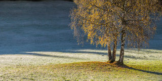 Autumn Landscape with Lonely Tree. On meadow near forest, fall view Royalty Free Stock Photography