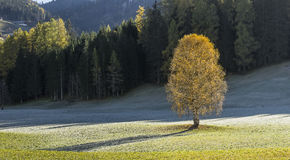 Autumn Landscape with Lonely Tree. On meadow near forest, fall view Royalty Free Stock Photos
