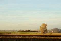 Autumn landscape of lonely tree at sunset Royalty Free Stock Photo