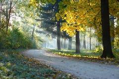 Autumn Landscape los rayos de sol Fotos de archivo