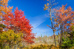 Autumn Landscape in Maine and Bue Sky. Amazing Autumn Colours in Rural Maine and Clear Sky royalty free stock image