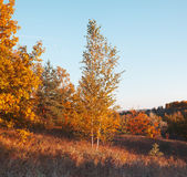 Autumn landscape in meadow Royalty Free Stock Images