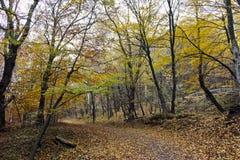 Autumn Landscape med gula träd, Vitosha berg, Bulgarien arkivfoton