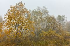 Autumn Landscape med gula träd, Vitosha berg, Bulgarien fotografering för bildbyråer
