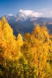 Autumn Landscape met berkbos en berg piekushba Stock Foto's