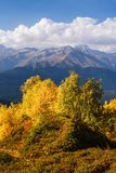 Autumn Landscape met berkbos en berg piekushba Stock Fotografie