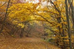 Autumn Landscape met gele bomen, Vitosha Berg, Bulgarije royalty-vrije stock foto