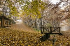 Autumn Landscape met gele bomen, Vitosha Berg, Bulgarije Royalty-vrije Stock Fotografie