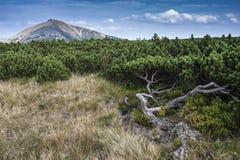 Autumn Landscape met Installaties en Berg stock fotografie