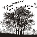 Autumn landscape and migratory geese. Vector illustration of autumnal mood with a group of trees and wild geese Royalty Free Stock Images