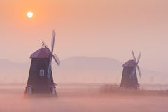 Autumn landscape misty morning on the wooden windmills in the pa Royalty Free Stock Image
