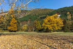 Autumn Landscape mit gelbem Baum nahe Pancharevo See, Bulgarien Stockfotografie