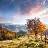 Autumn Landscape mit großem gelbem Baum und Bergpanorama Stockbild