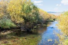Autumn Landscape mit Kokanee, das im Fluss laicht Erdbeere Stockfoto