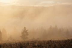 Autumn Landscape mit Nebel und Sonne Stockbild