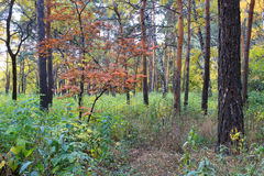 Autumn landscape - in a mixed forest Stock Images