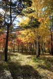 Autumn landscape - mixed forest Royalty Free Stock Photography