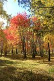Autumn landscape - mixed forest Royalty Free Stock Photo