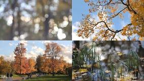Autumn Landscape Modo do outono dia ensolarado no parque do outono filme