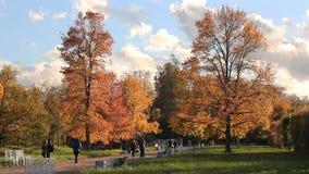 Autumn Landscape Modo do outono dia ensolarado no parque do outono video estoque