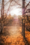 Autumn landscape, Moorpark. In Arrach in Bavaria Royalty Free Stock Photos