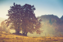 Autumn landscape in mountain. Colorful trees in fog and rain. Royalty Free Stock Photography