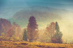 Autumn landscape in mountain. Colorful trees in fog and rain. Stock Photos
