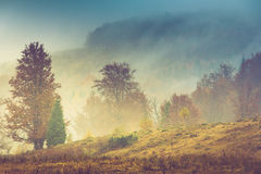 Autumn landscape in mountain. Colorful trees in fog and rain. Royalty Free Stock Images