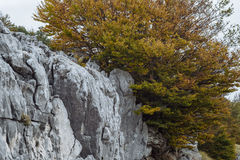 Autumn Landscape in mountain, Montenegro royalty free stock photography