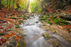 Autumn landscape with mountain river and colorful trees Stock Image