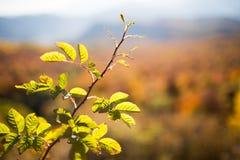 Autumn landscape in the mountains of Lago-Naki Stock Image