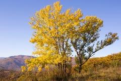 Autumn landscape in the mountains of Lago-Naki Royalty Free Stock Photo